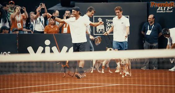 Il torneo di Sao Paulo ed i cani raccattapalle (Video)