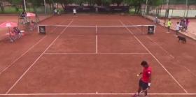 Video del Giorno: Un cane tra due tennisti