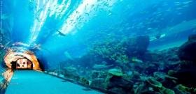 Forse in arrivo a Dubai il primo campo da tennis sott'acqua