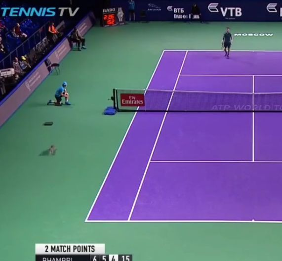 Video del Giorno: Arriva un gatto sul match point