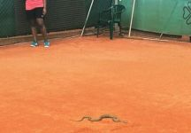 Un serpente al Challenger di Furth